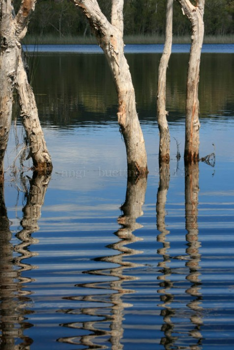 When one comes to love a place ... Brown Lake, North Stradbroke Island, Qld, Australia
